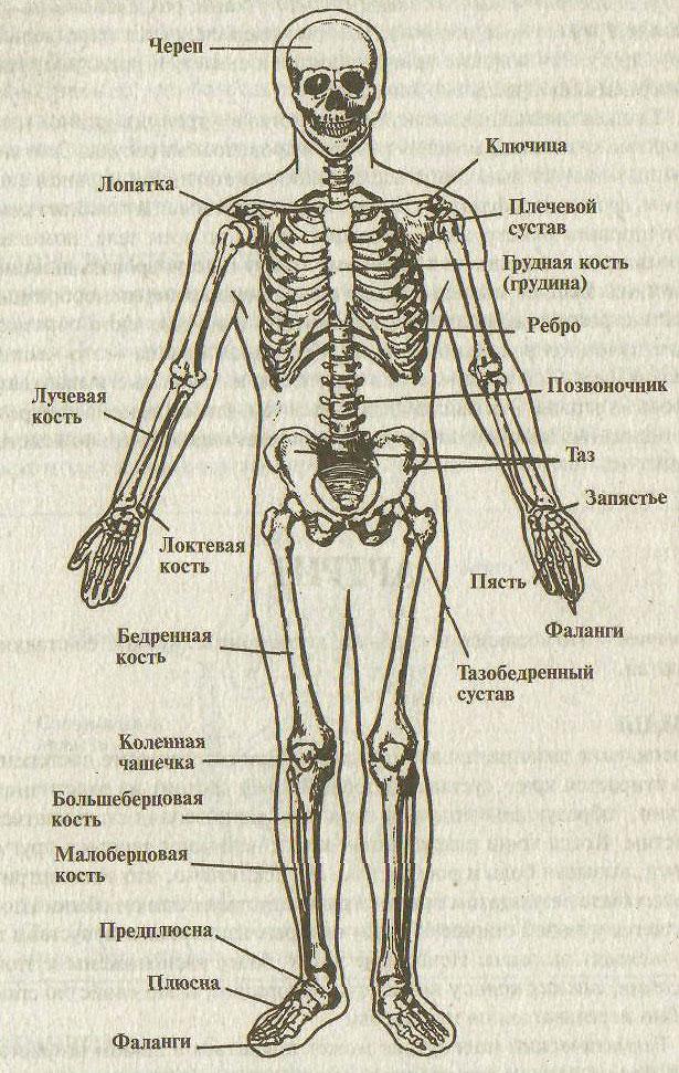 взгляд кости скелета человека фото с описанием открытой местности, становится